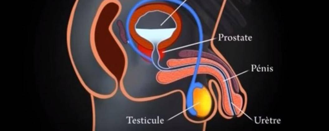 prostate_0_field_mise_en_avant_principale_1_0
